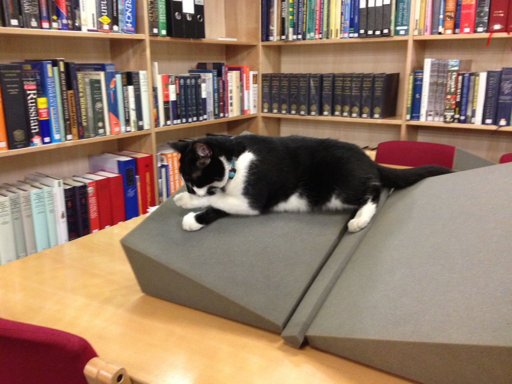 Cat sitting on an archive bookrest